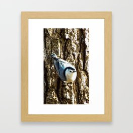 Nosey Nuthatch Framed Art Print