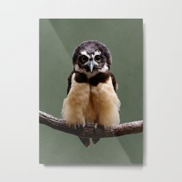 Adorable Spectacled Owl Metal Print