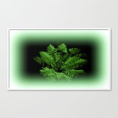 Fern from 30 metres Above! Canvas Print