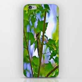 Downy Woodpecker iPhone Skin