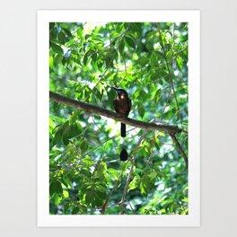 Cenote Squabbler Art Print