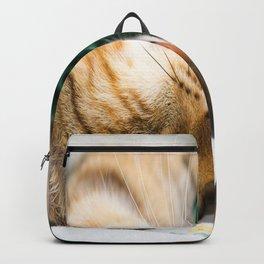Sleeping kitten Backpack