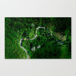 Jungle Roads Canvas Print