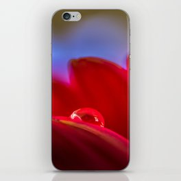 Simply Put water droplet on a Gerber Daisy iPhone Skin