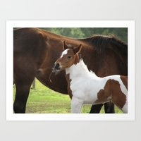 Baby paint horse Art Print