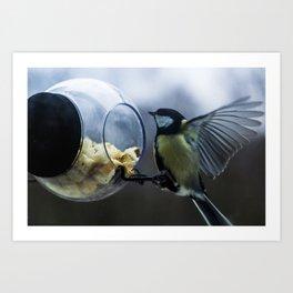 Bird landing Art Print