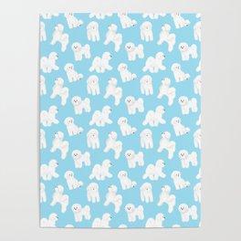 Bichon Frise Pattern (Blue Background) Poster
