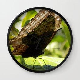 butterfly bathing in the sunlight Wall Clock