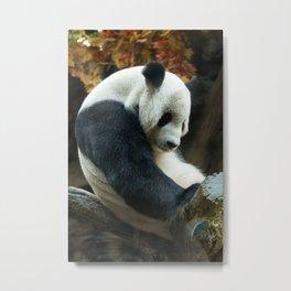 Sitting Panda Metal Print