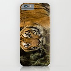 Bengal Tiger iPhone 6s Slim Case