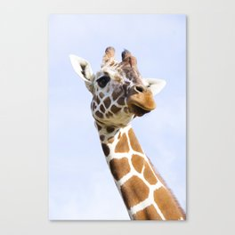 Young Giraffe in nature, close up Canvas Print