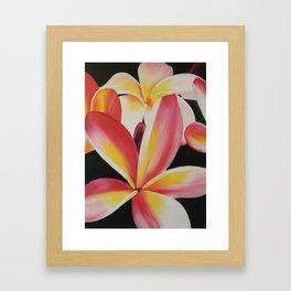 smiling plumerias Framed Art Print