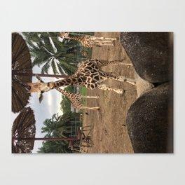 Cute giraffe in a zoo, Malaysia Canvas Print