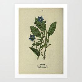 Flower Borage borago officinalis19 Art Print