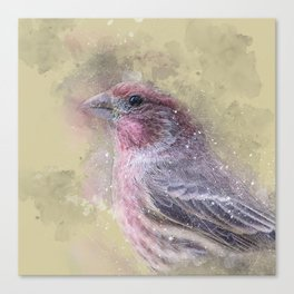 Rosey House Finch Canvas Print