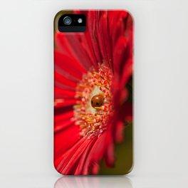 The Gerbera and the Ladybird iPhone Case