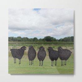 5 black sheep Metal Print