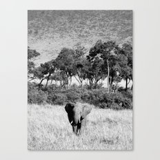 Elephant in Maasai Mara Canvas Print
