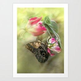 Caligo memnon on pink flowers Art Print
