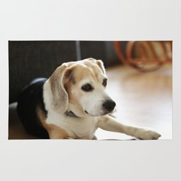Closeup Of Healthy Beagle Puppy Rug