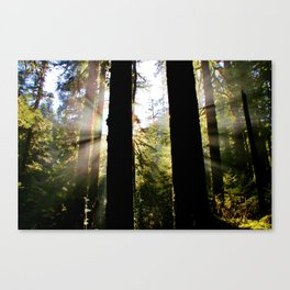 Rainforest Sun Rainbow Canvas Print