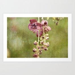 Chocolate Vine Art Print