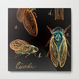 CICADA  - Artistic Environments - Natural History Poster Metal Print