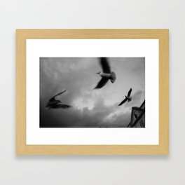RiverGulls - 3 Framed Art Print