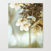 hydrangea Canvas Prints featuring hydrangea by Bonnie Jakobsen-Martin