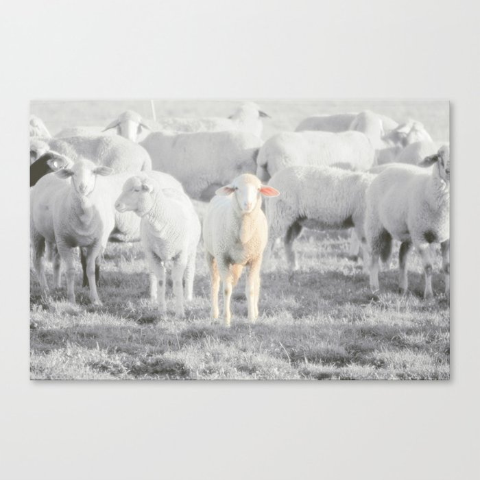 STAY GOLD Canvas Print