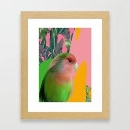 Love Bird with Palms Framed Art Print
