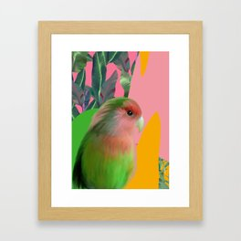 Love Bird with Palms Framed Art Print
