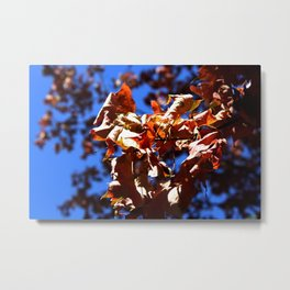 Crisp Fall Leaves Metal Print