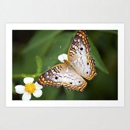 Furry Butterfly Art Print