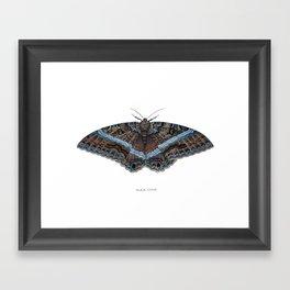 Black Witch Moth Framed Art Print