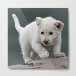White lion cub Metal Print