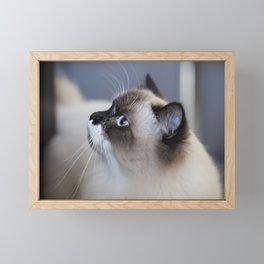 Ragdoll Cat Framed Mini Art Print
