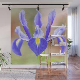 Blue flower Iris xiphium Wall Mural