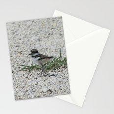 Baby Killdeer Stationery Cards