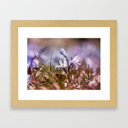 spring is just around the corner  Framed Art Print