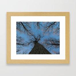 Alberi Framed Art Print