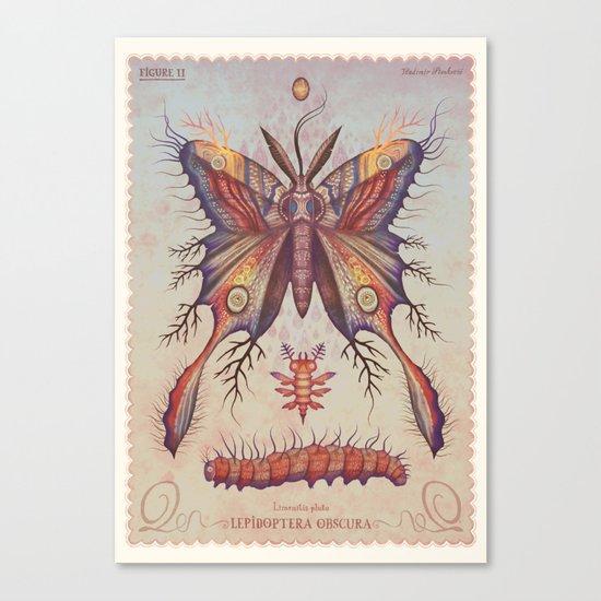 Limenitis pluto Canvas Print