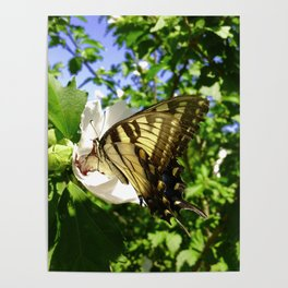 Seasonal Butterfly Poster