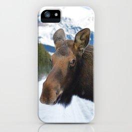 Beautiful Moose in Jasper National Park iPhone Case