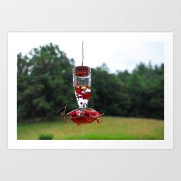 Teeny Humming Bird Friend Art Print