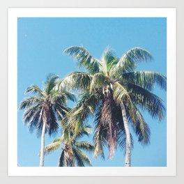 Palms of Puerto Rico  Art Print