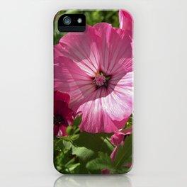 summer mallow VII iPhone Case