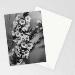 Baby's Breath B&W Stationery Cards