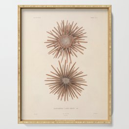 Naturalist Sea Urchins Serving Tray