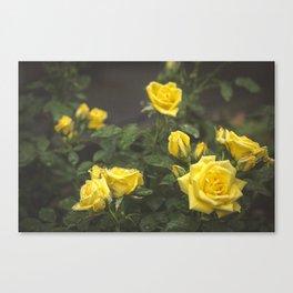 Sunshine Shower Canvas Print